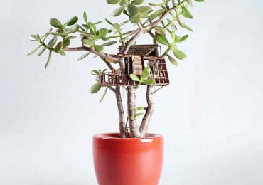 Artist Builds Super Cute Miniature Treehouses Around House Plants