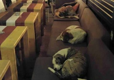 Café In Greece Opens It's Doors To Stray Dogs Every Night To Give Them A Warm Place To Sleep