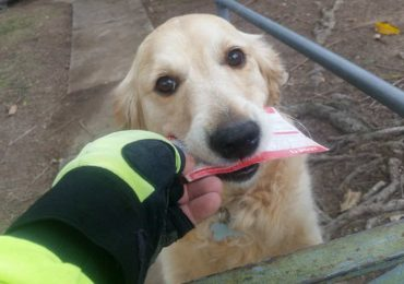 Mailman Writes Special Letters To Dog Who Loves To Receive Mail