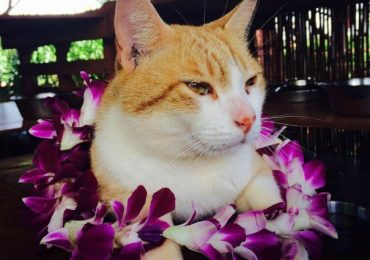 Cat Wonderland Exists, and You Can Visit it in Hawaii!