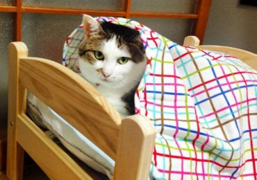 Ikea Donated Doll Beds To Cat Shelter And You Won't Believe How Cute They Look On It