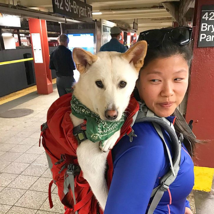 Creative NYC Dog Owners Get Around New Rule Banning Dogs On The - Nyc subway bans dogs unless fit bag new yorkers reacted