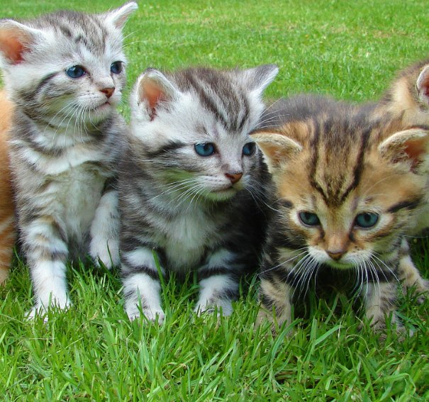 This Vet Clinic Is Offering The Perfect Job For Cat Lovers
