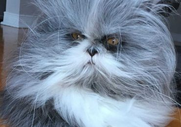 Is It A Cat Or A Dog? Mysterious Pet Intrigues The Internet and Goes Viral