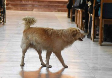 Dog Enters Church While There's A Mass For Sick Children. What He Does Next Will Put a Smile On Your Face.