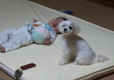 Baby Starts Crying And This Dog's Reaction Is The Sweetest Thing You'll See Today!