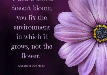 Bloom Wherever You Go.