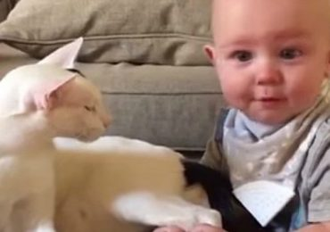 Parents Were Nervous To Introduce Baby To Newly Adopted Cat. The Way They Bond Will Bring A Smile To Your Face