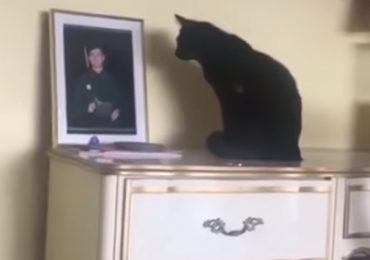 Cat Missing Her Favorite Human Can't Stop Staring At His Picture